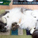2017年快眠の極意 質の良い睡眠と時間で疲れをとる!