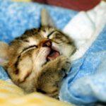 """【所さんお届けモノです】""""猫分補給""""で癒し効果!""""あなご""""も喜ぶネコグッズ!"""