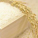 五ツ星マイスターに学ぶおいしいお米の選び方と正しい保存方法&とぎ方とは